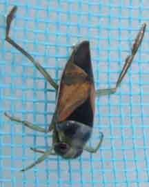 Swimming Pool Bugs Bed Mattress Sale