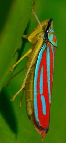 Beyoğlu böcek ilaçlama