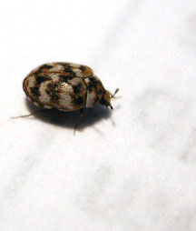 Identification Insecte C Est Quoi Invasion