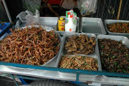edible insects informative speech Bugs you can eat, from a to z (this is a work-in-progress please feel free to add  to it also, worpress does some funky stuff with formatting this page.