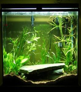 Aquarium 20090322