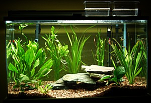 50 Gallon Aquarium