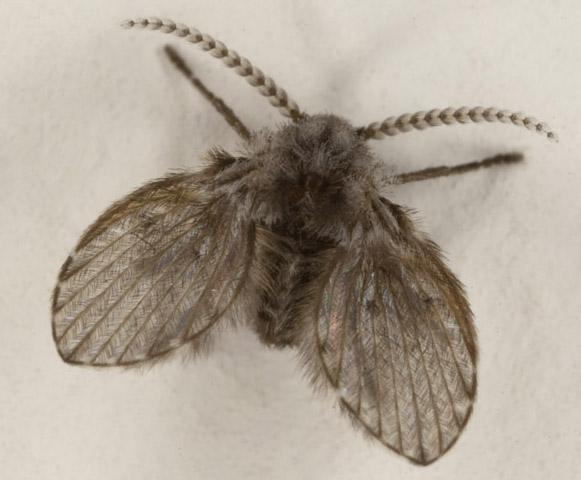 Bathroom Bugs bathroom fly - what's that bug?