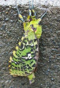 Unknown Green Moth from New Zealand