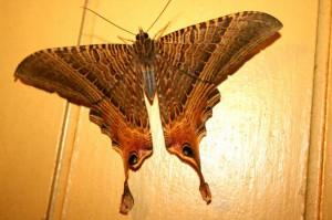 Day Flying Moth, we believe