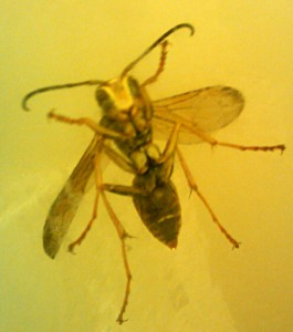 Paper Wasp in the Shower