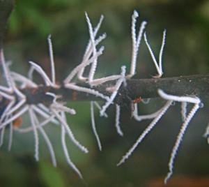 Unknown Hemipteran