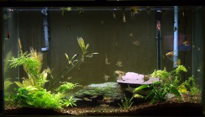 Grow Out Aquarium #2