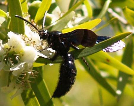 Plantas de interior - Flores de lirio de paz se están convirtiendo en negro - Jardinería & amp; Intercambio de Pila de Paisajismo