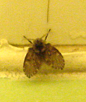 Bathroom Fly What S That Bug
