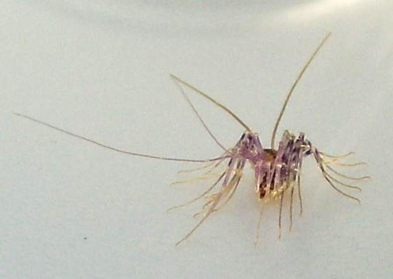 house centipede what 39 s that bug