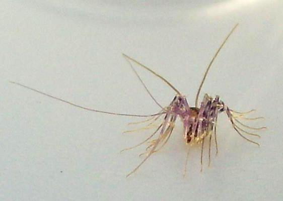 Tiny Black Inchworms In House House Decor Ideas