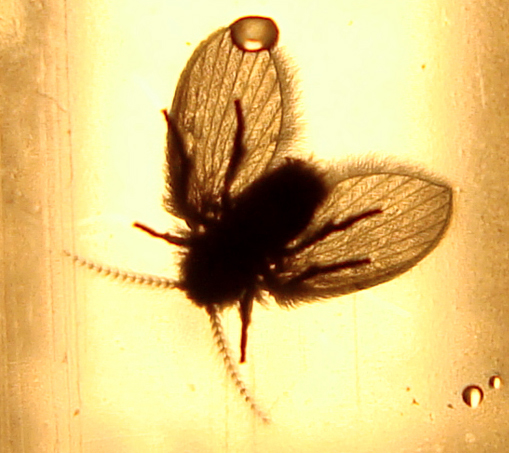 Bathroom Fly From Portugal What 39 S That Bug