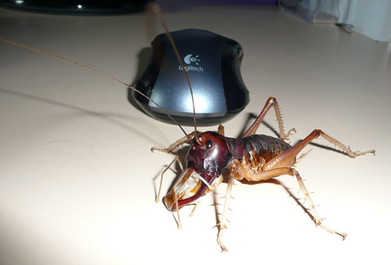 Insects at EnchantedLearningcom