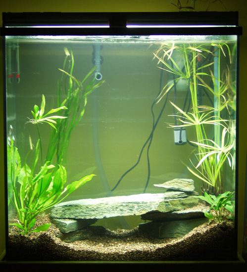 Angelfish Aquarium Setup