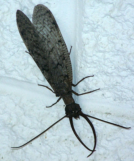 Dobsonfly - The Dobsonfly E.P.
