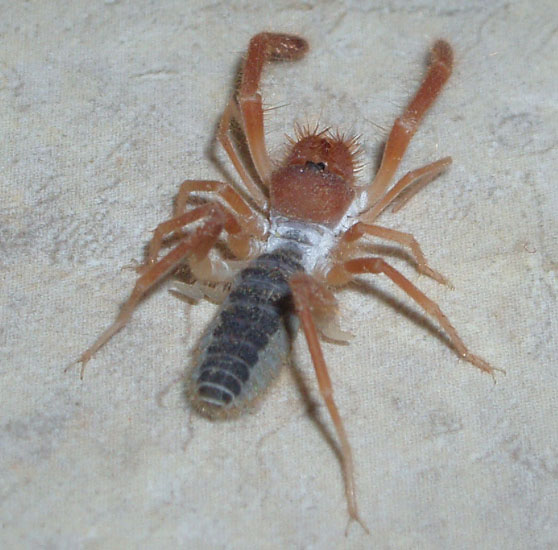 Basement Bugs: What's That Bug?