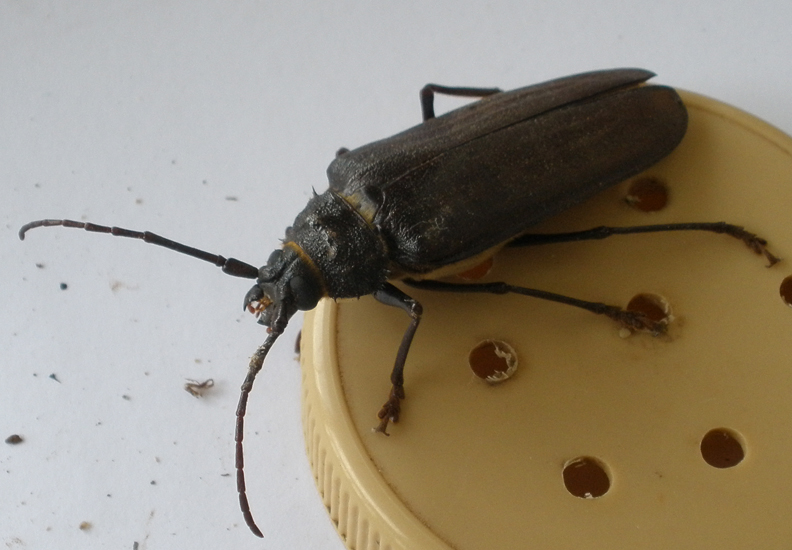 ipm on beetles essay Integrated pest management is a preventative, long-term, low toxicity means of  controlling  who will identify insects for you and answer pest-related questions.