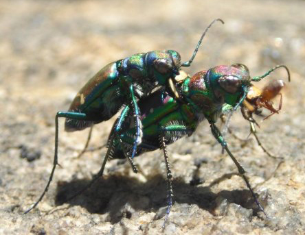 Beetle Reproduction Reproduction - Species...