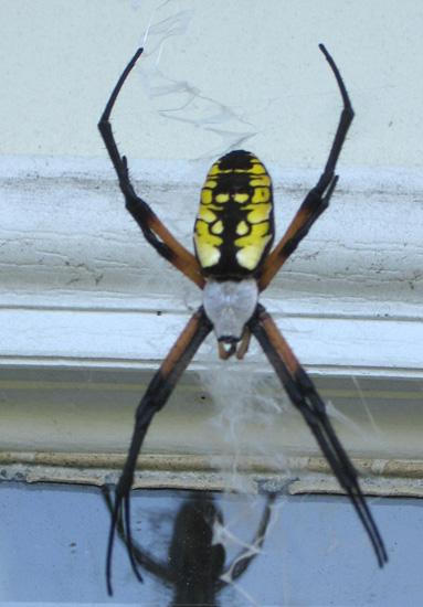 spider writing