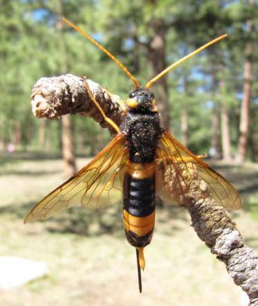 Brown wasp uk