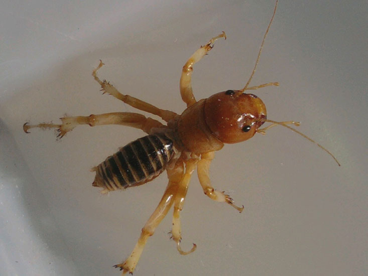 how to get rid of potato bugs in garden