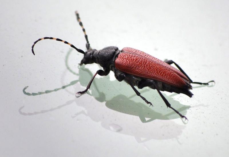 pine beetle essay