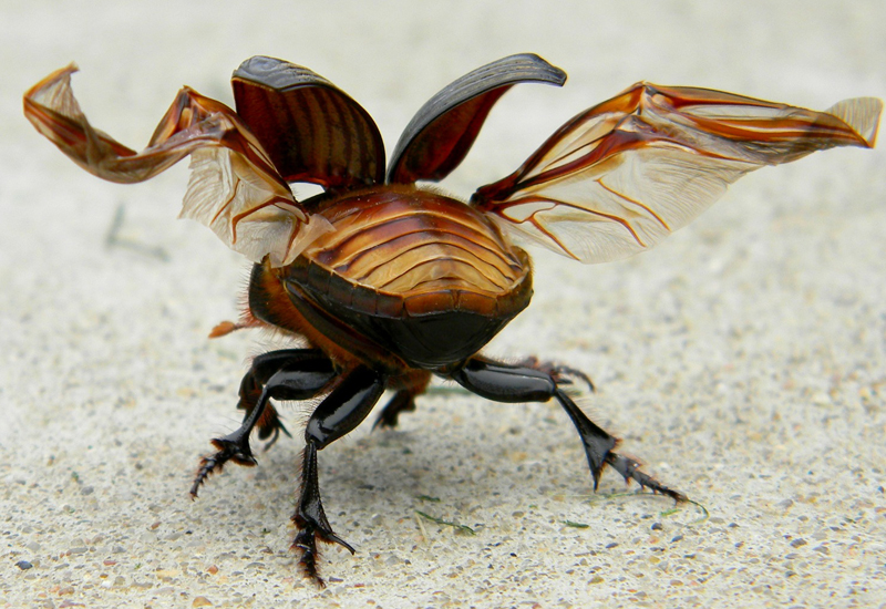 Buggy Vocabulary Words Archives - What's That Bug?