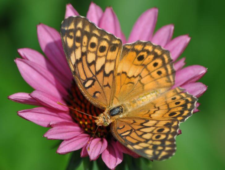 Actividades de la mariposa para los niños - Growing With Science Blog