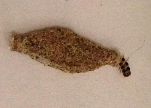 Case Bearing Moth Larva