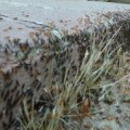 ant_swarm_cathy_2