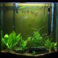 aquarium_1_20100103