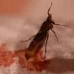 bedbug_seattle