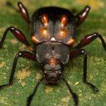 beetle_humps_singapore_antonio