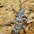 beetle_maine_james