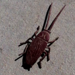 beetle_nevada_hope