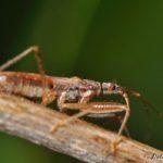 bug_nathanael