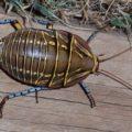 bush_cockroach_australia_jennie