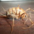 camel_cricket_courtney
