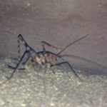 camel_cricket_david