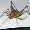 camel_cricket_john