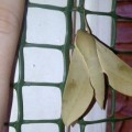 cape_hawkmoth_south_africa_michelle