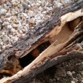 carpenter_bee_nest_matt