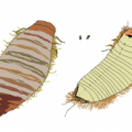 carpet_beetle_larva_drawing_nick