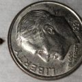 carpet_beetle_larva_stacey