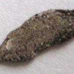 casebearing_moth_larva