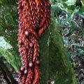 caterpillar_aggregation_brazil_alex