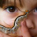caterpillar_child_zimbabwe_dana