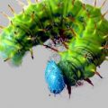 caterpillar_costarica