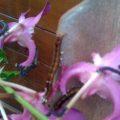 caterpillars_hawaii_ryan
